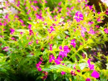 Nature. The purple flower background royalty free stock photography