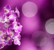 Purple and white orchid flowers on purple backgrou Royalty Free Stock Photos