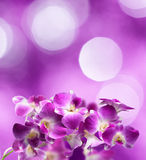 Purple and white orchid flowers Royalty Free Stock Image