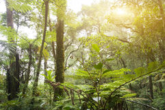 Nature rain forest Royalty Free Stock Photo