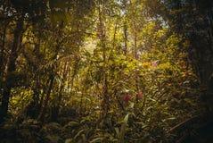 Nature rain forest. Tropical Rainforest Landscape. Malaysia, Asia, Borneo, Sabah. Nature rain forest. Tropical Rainforest Landscape, Malaysia, Asia Borneo Sabah royalty free stock image