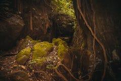 Nature rain forest. Tropical Rainforest Landscape. Malaysia, Asia, Borneo, Sabah. Nature rain forest. Tropical Rainforest Landscape, Malaysia, Asia Borneo Sabah stock images