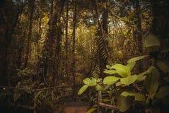Nature rain forest. Tropical Rainforest Landscape. Malaysia, Asia, Borneo, Sabah. Nature rain forest. Tropical Rainforest Landscape, Malaysia, Asia Borneo Sabah stock photography