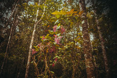 Nature rain forest. Tropical Rainforest Landscape. Malaysia, Asia, Borneo, Sabah. Nature rain forest. Tropical Rainforest Landscape, Malaysia, Asia Borneo Sabah stock photos