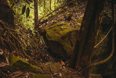 Nature rain forest. Tropical Rainforest Landscape. Malaysia, Asia, Borneo, Sabah. Nature rain forest. Tropical Rainforest Landscape, Malaysia, Asia Borneo Sabah royalty free stock photo