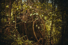 Nature rain forest. Tropical Rainforest Landscape. Malaysia, Asia, Borneo, Sabah. Nature rain forest. Tropical Rainforest Landscape, Malaysia, Asia Borneo Sabah royalty free stock photos