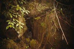 Nature rain forest. Tropical Rainforest Landscape. Malaysia, Asia, Borneo, Sabah. Nature rain forest. Tropical Rainforest Landscape, Malaysia, Asia Borneo Sabah stock photo