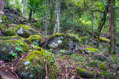 Nature, rainforest in Lamington National Park, Queensland, Austr Royalty Free Stock Image
