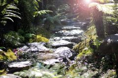 Nature in the rainforest royalty free stock photography