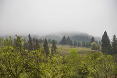 Nature rainy forest landscape Royalty Free Stock Photos