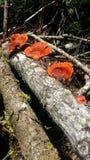 Nature. Red mushroom, nature reserve Stock Photo
