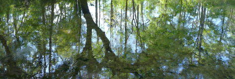 Nature Reflection Abstract. Reflection of trees in natural spring water at Lafayette Blue Springs State Park, Florida. Taken in the springtime Royalty Free Stock Image