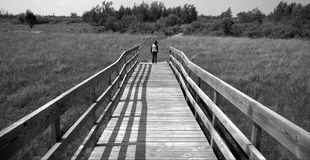 Nature Refuge Trail. A black and white photo of a little girl walking on a wooden walkway on a nature trail Royalty Free Stock Image