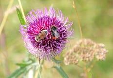 Nature in region Liptov, Slovakia Stock Images