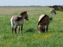 Nature reserve askania-nova stock images