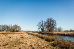 Dutch nature reserve in the beginning of the spring season. Nature reserve in the beginning of the spring season. Softstem bulrush, reeds and trees are growing Royalty Free Stock Photo