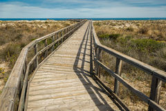 Nature Reserve Boardwalk Walking Route Stock Images