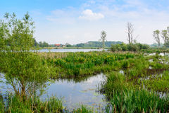 Nature reserve Bourgoyen in Ghent, Belgium Stock Photos
