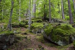Nature Reserve, Forest, Vegetation, Woodland stock photos