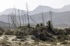 Nature reserve of Gata-Nijar`s End, Almeria. Andalusia, Spain. Cape of Good Hope of Cat is an end located in the south of the Iberian peninsula, opposite to the Stock Photo