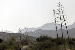 Nature reserve of Gata-Nijar`s End, Almeria. Andalusia, Spain. Cape of Good Hope of Cat is an end located in the south of the Iberian peninsula, opposite to the Stock Photos