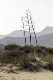 Nature reserve of Gata-Nijar`s End, Almeria. Andalusia, Spain. Cape of Good Hope of Cat is an end located in the south of the Iberian peninsula, opposite to the Royalty Free Stock Image