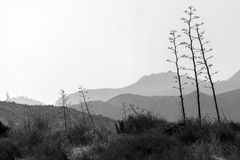 Nature reserve of Gata-Nijar`s End, Almeria. Andalusia, Spain. Cape of Good Hope of Cat is an end located in the south of the Iberian peninsula, opposite to the Royalty Free Stock Photography