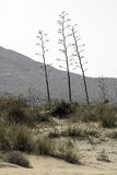 Nature reserve of Gata-Nijar`s End, Almeria. Andalusia, Spain. Cape of Good Hope of Cat is an end located in the south of the Iberian peninsula, opposite to the Royalty Free Stock Photo