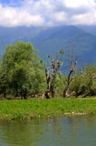 Nature Reserve Kerkini lake,Greece Stock Photography