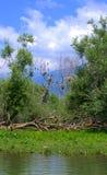 Nature Reserve Kerkini lake,Greece Stock Photo