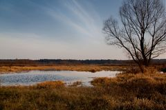 Nature reserve with a natural pond and in the foreground a detai. Swamp with cottograss with reflected sky stock image