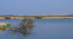 Nature reserve in the Netherlands Royalty Free Stock Photography