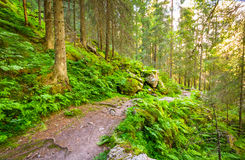 Nature reserve in the Norwegian forest in Tovdal. Norway Royalty Free Stock Image