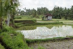 Nature Reserve, Paddy Field, Wetland, Grass stock photography