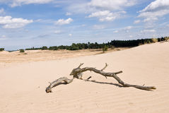 Nature Reserve with Sanddrift Royalty Free Stock Photos