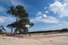 Nature Reserve with Sanddrift Stock Image