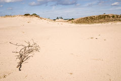 Nature Reserve with Sanddrift Royalty Free Stock Photo