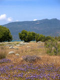 Nature Reserve at Skala Kalloni Lesvos Greece. The Greek Island of Lesvos or Lesbos is situated just off the Coast of Turkey. The island is the 3rd largest Greek stock images