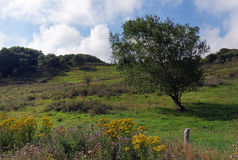 Nature Reserve in Upper Normandy. Valleuse of Antifer nature Reserve in Upper Normandy Stock Photography