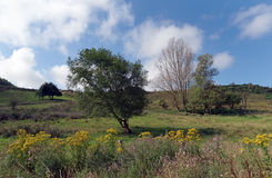 Nature Reserve in Upper Normandy. Valleuse of Antifer nature Reserve in Upper Normandy stock photo