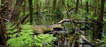 Nature reserve-wetland Stock Photos
