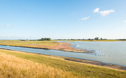 Nature reserve with wetland in the summer season Stock Images