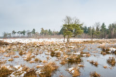 Nature reserve in wintertime Stock Images