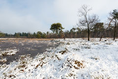 Nature reserve in wintertime Royalty Free Stock Images
