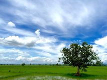 Nature. Rice fields in Thailand Stock Photography