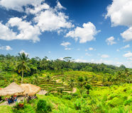 Rice terrace of Bali Island Stock Photo