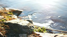Nature river plant rocks. Spring river flowing between the mossy rocks stock video footage