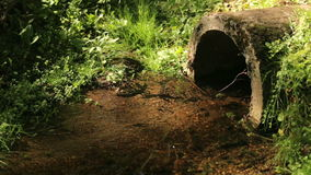 The nature of the river stream tube during the summer. The nature of the river stream tube during summer stock video