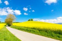 Nature Road Stock Photo