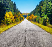 Road in golden autumn forest Royalty Free Stock Photography